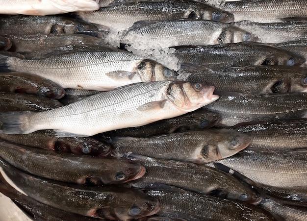 Pesce di spigola su ghiaccio