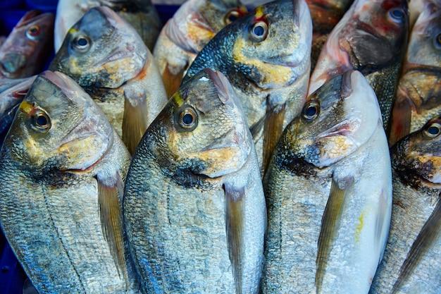 Pesce dorada sparus aurata dal mediterraneo