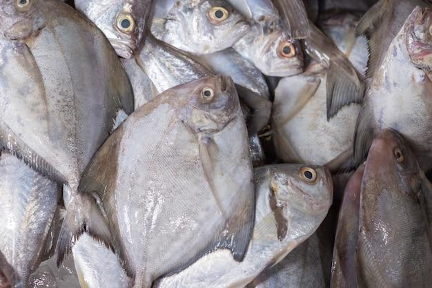 Pesce fresco immesso sul ghiaccio venduto nel mercato.
