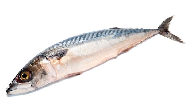 Pesce fresco saba (sgombro) isolato su bianco.