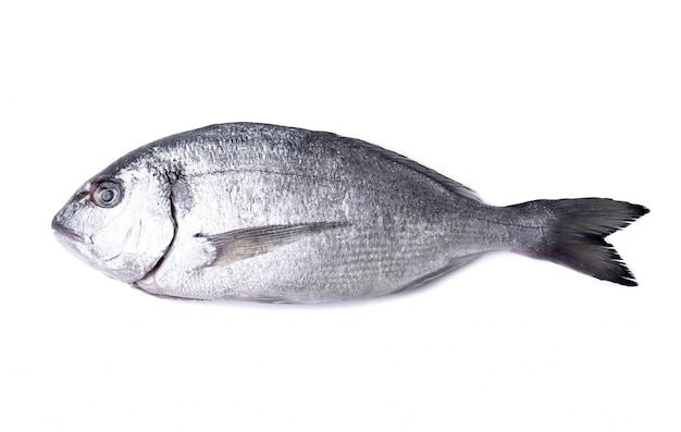 Pesce fresco su bianco