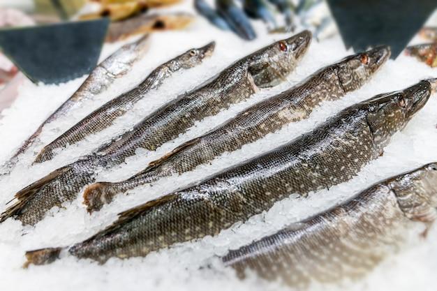 Pesce fresco su ghiaccio decorato per la vendita al mercato, luccio