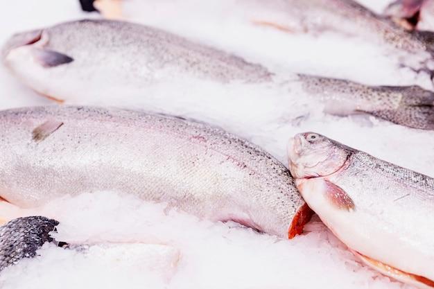 Pesce fresco su ghiaccio su un bancone in un supermercato. avvicinamento.