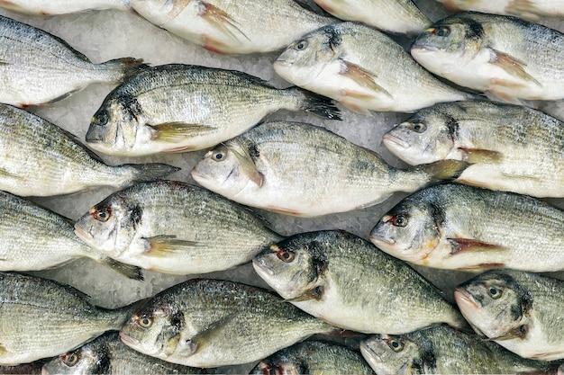 Pesce raffreddato fresco nelle file su ghiaccio in un deposito. ingrediente dietetico utile per la cena, una vetrina in un ristorante di pesce.