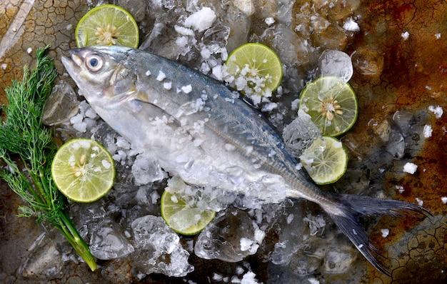 Pesce trevally fresco congelato.