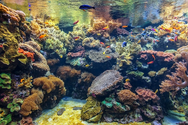 Pesci tropicali in un acquario di corallo.