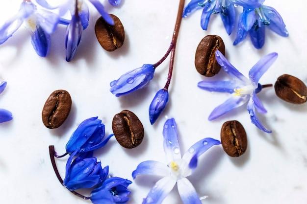 Petali bianchi e porpora del fiore, sfuocatura del fondo del fuoco selettivo