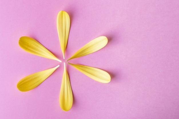 Petali di fiori di colore giallo brillante si trovano sotto forma di un fiore.