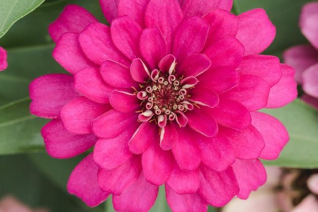 Petali di fiori rosa in più strati