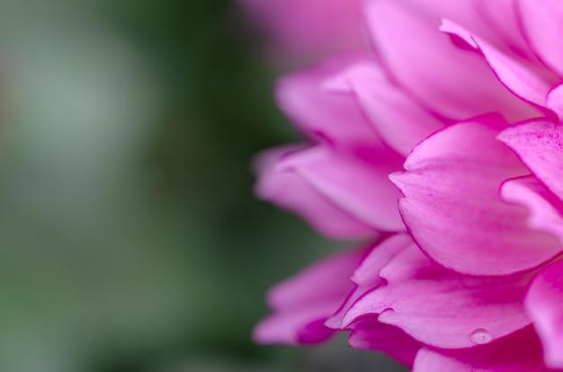 Petali di fiori, sfondo del modello, offuscata