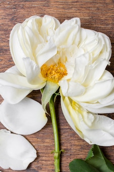 Petali di rosa bianchi del primo piano sul tavolo