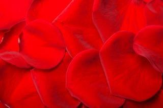 Petali di rosa, gemma