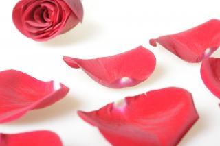 Petali di rosa storia d'amore, rosso
