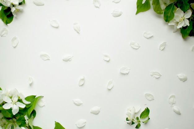 Petali e fiori bianchi sotto forma di una vista dall'alto del telaio