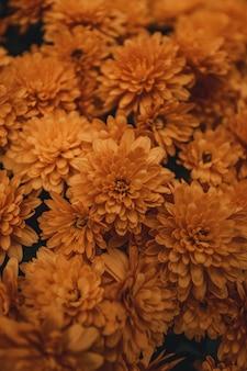 Petali gialli e arancioni