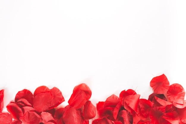 Petali rossi su sfondo bianco