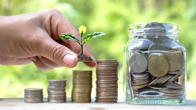 Pianta a mano piccoli alberi su monete e luce naturale, finanzia idee e risparmia denaro.