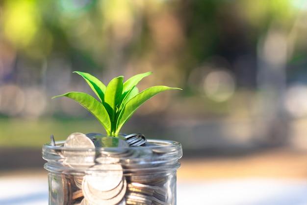 Pianta che cresce dalle monete nel vetro. concetto di crescita economica e finanziaria.