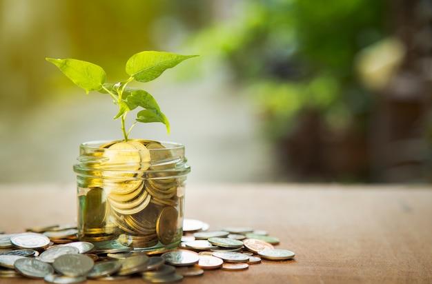 Pianta che cresce in monete di risparmio con sfondo verde bokeh