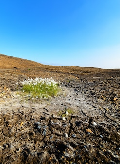 Pianta che cresce in montagna arida