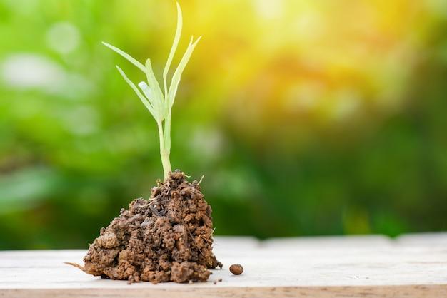 Pianta che cresce su terreno su legno con pianta giovane verde