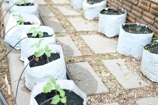 Pianta da orto in crescita con sistema di irrigazione a goccia