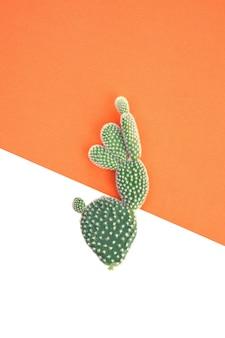 Pianta del cactus su priorità bassa arancione e bianca