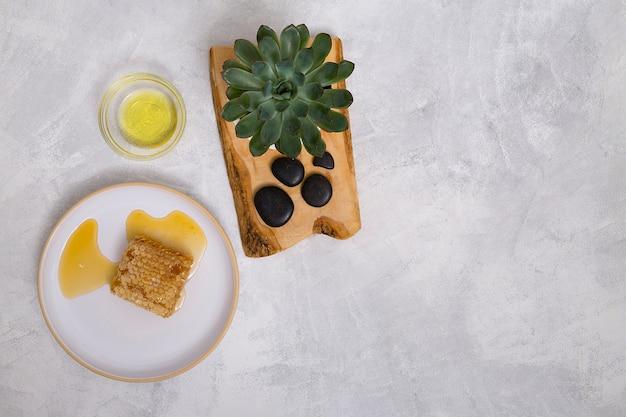 Pianta di cactus e lastone su tavola di legno con olio e nido d'ape sul fondale in cemento