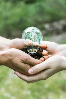 Pianta di concetto in lampadina di vetro