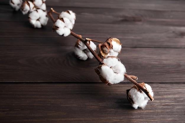 Pianta di cotone con fiori bianchi su fondo di legno marrone