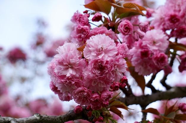 Pianta di fiori rosa nella natura