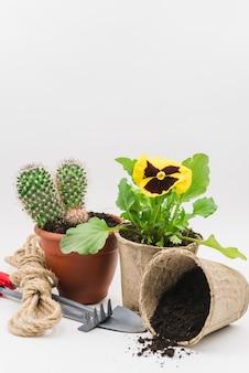 Pianta di vaso di torba di cactus e viola del pensiero con attrezzi da giardinaggio; terreno e corda contro il fondale bianco