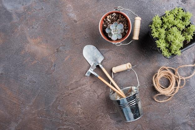 Pianta e attrezzi da giardinaggio con spazio di copia