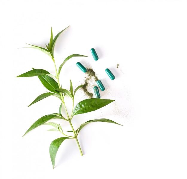 Pianta e capsula di erbe fresche di kariyat su spazio bianco. vista dall'alto