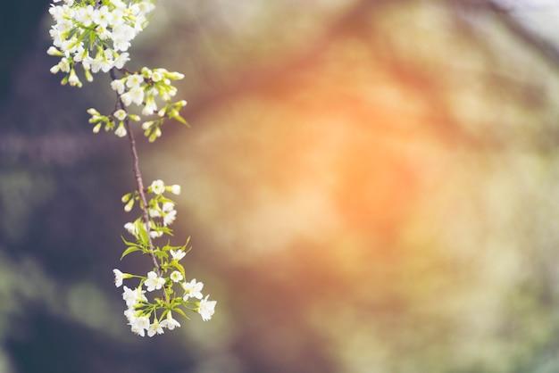 Pianta e fiore in giardino