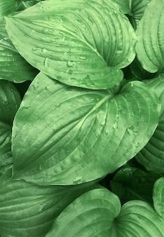 Pianta forestale tropicale della goccia di pioggia di estate della natura del fondo delle foglie verdi