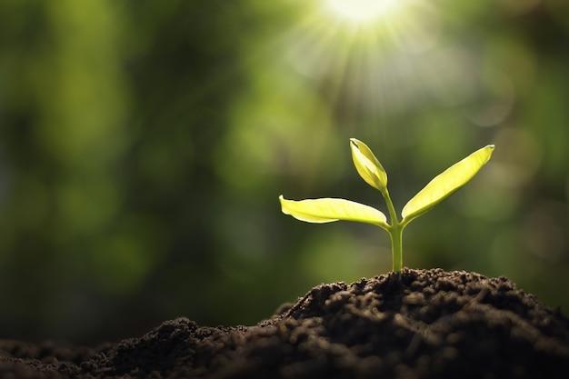 Pianta giovane in crescita in giardino e luce del mattino