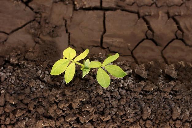 Pianta in crescita sulla terra