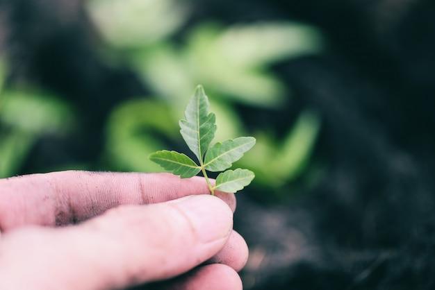 Pianta in mano per la semina nel giardino - lavori di piccola pianta di giardinaggio