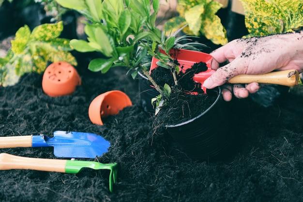 Pianta in mano per piantare nel giardino / lavori di piantagione di attrezzi da giardinaggio nel cortile