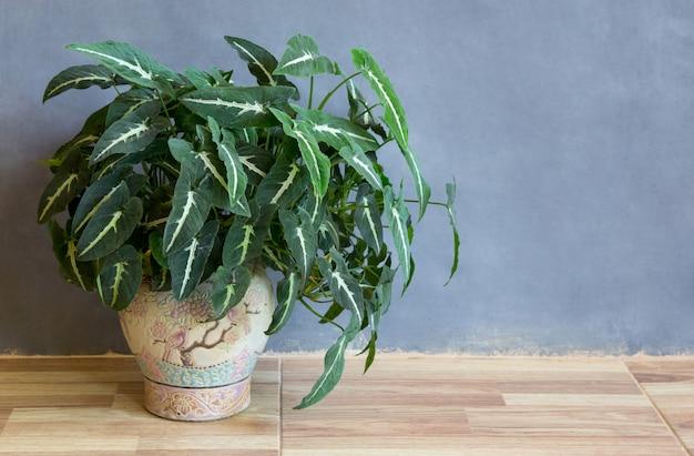 Pianta in vaso da giardino sul pavimento in una stanza