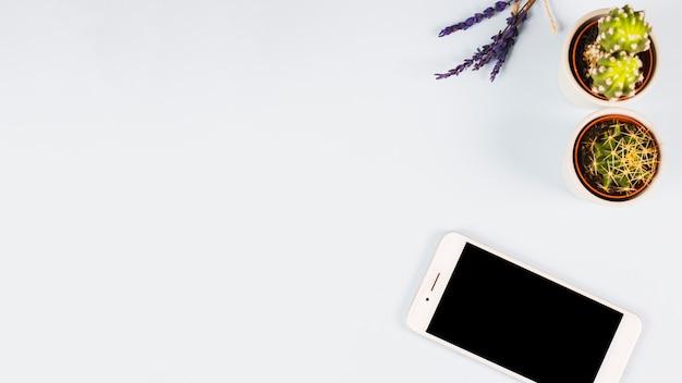 Pianta in vaso di cactus; lavanda e smart phone su sfondo bianco