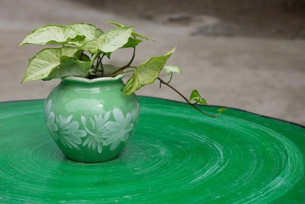 Pianta in vaso in giardino sul tavolo all'aperto