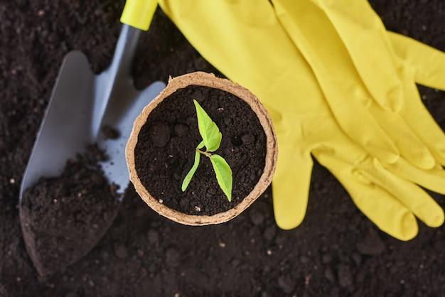 Pianta in vaso, piccola pala e guanti gialli sul terreno. concetto di cura delle piante