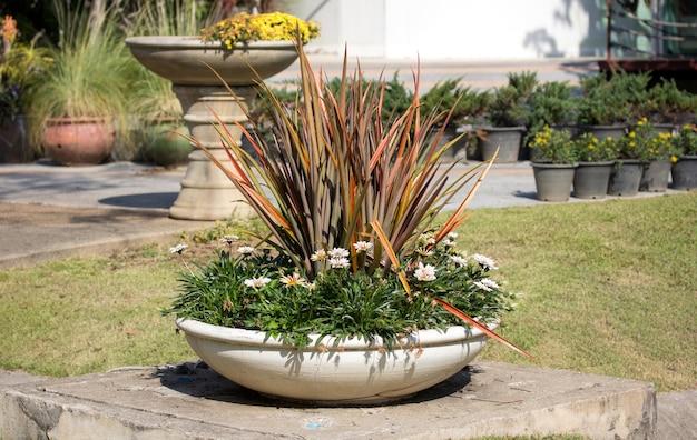 Pianta in vaso sul giardino all'aperto