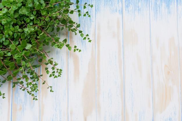 Pianta in vaso verde nel vaso sul fondo della tavola in legno