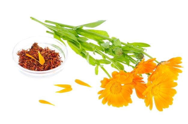 Pianta medicinale con fiori d'arancio calendula officinalis