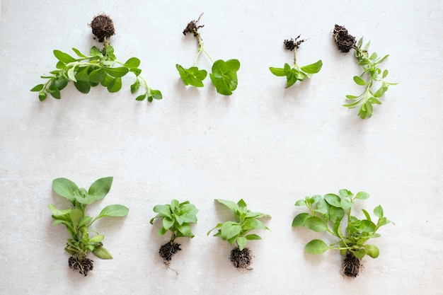 Pianta. pianta d'appartamento sul tavolo