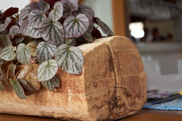 Pianta porpora del cespuglio sul ceppo di legno per la decorazione sulla tavola nel fondo del ristorante della sfuocatura, fuoco selettivo