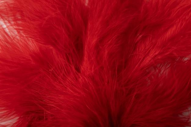 Pianta rossa fresca